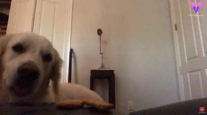 O cão fica observando os petiscos. (Foto: Reprodução Youtube/Videlo)