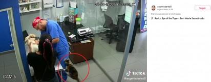 O cachorro choraminga e o gato ataca o assistente de veterinário Argenis Perez. (Foto: TikTok/argenisperez5)