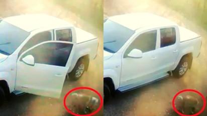 Motorista abandona cachorro em Jundiaí (SP). (Foto: Reprodução Facebook/A Voz da Região)