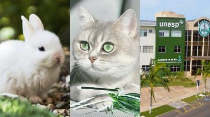 Imagem ilustrativa: coelho, gato (Fotos: Unsplash.com) | Fachada da Unesp, campus Botucatu (Foto: Unesp).