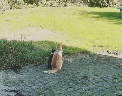 Stavros faz linda amizade com gatinho que vem visitá-lo sempre. (Foto: Instagram/@ la_riek)
