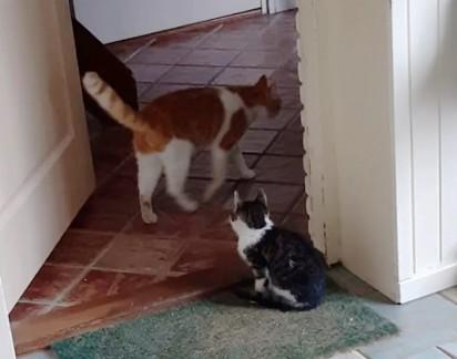 O gatinho desconhecido passou a frequentar a casa de Stavros. (Foto: Instagram/@la_riek)