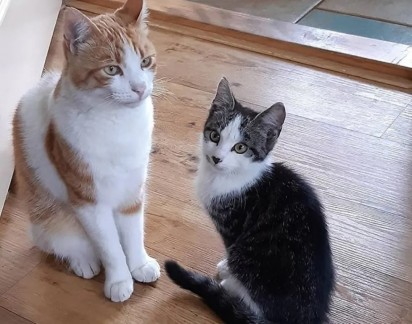 Os dois são inseparáveis que Klarieke adotou o amiguinho de Stavros e o chamou de Charlie. (Foto: Instagram/@la_riek)