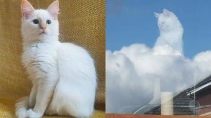 Foto de gatinho olhando pela janela viraliza nas redes sociais. (Foto:Twitter/@AmandaHyslop)