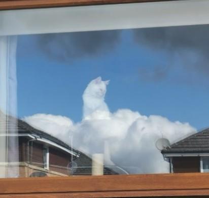 Gatinho olhando pela janela e ilusão de óptica faz ele parecer estar nas nuvens. (Foto:Twitter/@AmandaHyslop)