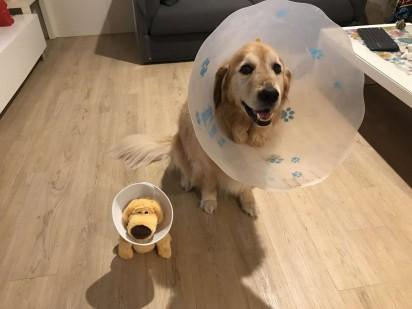 O cão Zep com seu novo amiguinho, um bichinho de pelúcia - ambos usando cones. (Foto: Arquivo Pessoal/Amber Gerick)