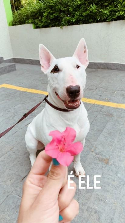 bull terrier Buddy. (Foto: Instagram/@Marigonzalez)