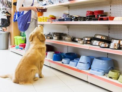 Cão acompanha sua dona ao pet shop. (Foto: Reprodução/the balance careers)