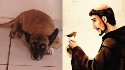 Cãozinho é curado depois de dona fazer promessa para São Francisco de Assis. (Foto: Arquivo Pessoal/Osinete Ribeiro.