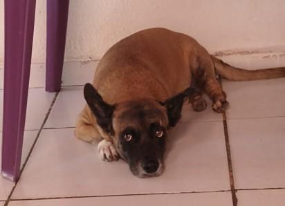 Cãozinho que foi curado pela promessa que dona Osinete Ribeiro fez para São Francisco de Assis. (Foto: Arquivo Pessoal/Osinete Ribeiro).