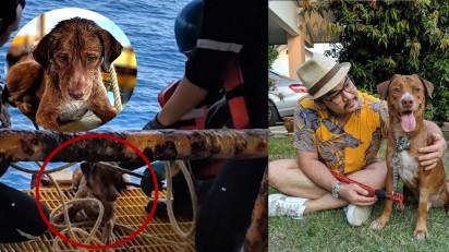 Cachorro resgatado em plataforma de petróleo e seu adotante (Fonte Facebook /  Vitisak Payalaw)