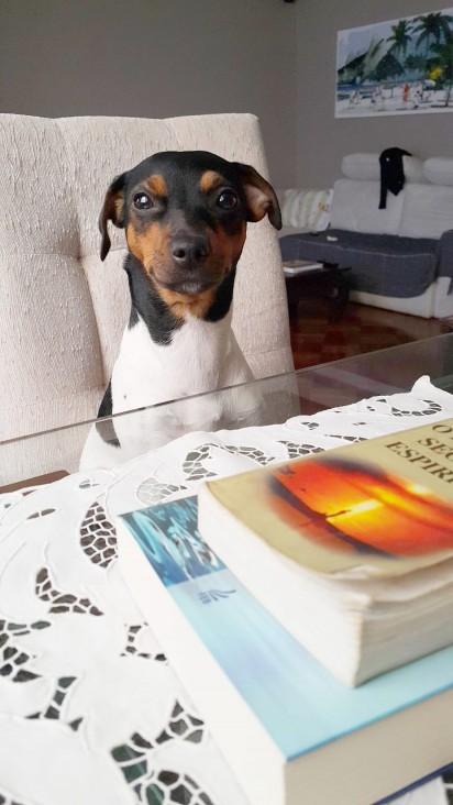 A cachorrinha Meg sentada numa mesa. Em sua frente está dois livros espíritas. (Foto: Mila Pozzatti)