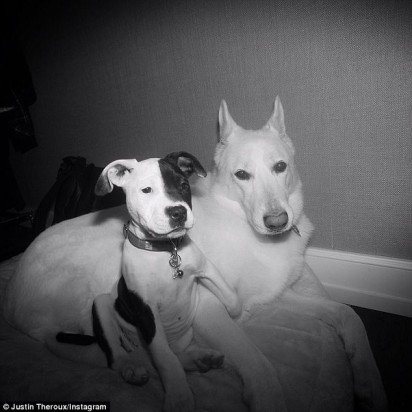 Pitbull chamado Sophie e o pastor alemão Branco que partiu em 2019