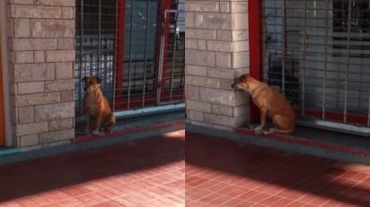 Comerciante falece e cadela de rua que ela cuidava permanece à sua espera. (Foto: Twitter/@NIrrutia)