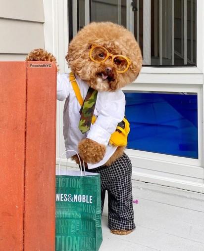 Agador vestido de calça, camisa, óculos de grau amarelo, gravata e pochete amarela. (Foto: Instagram/poochofnyc)
