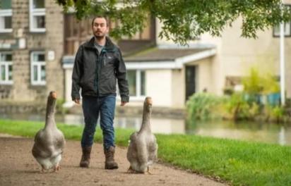 Sven Kirby passeia com os gansos pelo parque e praça. (Foto: Facebook/Sven Kirby)