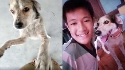 Cachorro desaparece de casa e por 90 dias o dono fica à sua procura. (Foto: Arquivo Pessoal/Rustico Samsom Jr)