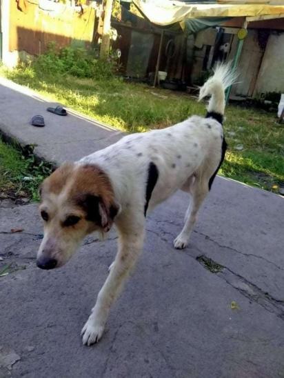 Coco havia desaparecido de casa por 90 dias. (Foto: Arquivo Pessoal/Rustico Samsom Jr)