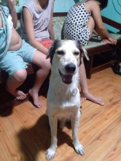 Coco sofreu nas ruas, mas com todo o amor e carinho da família se recuperou e novamente voltou a alegrar a casa. (Foto: Arquivo Pessoal/Rustico Samsom Jr)