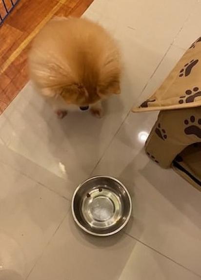 O Lulu olha seu potinho praticamente vazio. (Foto: Reprodução/ViralHog.com)