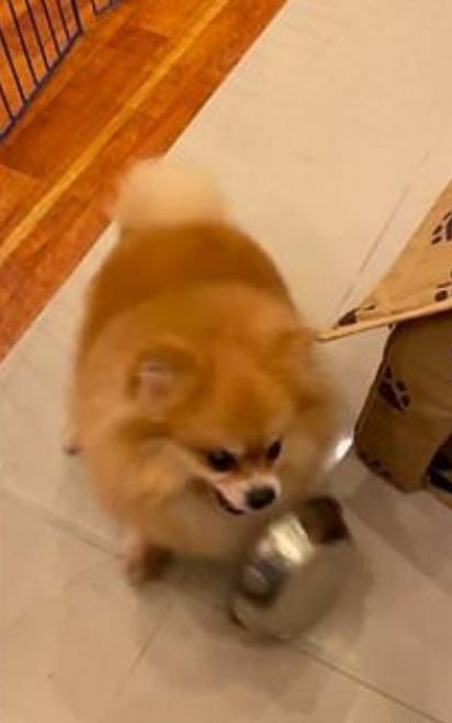 Brabo por ter recebido pouca ração, o cão vira o potinho e briga com a sua dona. (Foto: Reprodução/ViralHog.com)