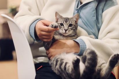 O tratamento integrativo oferece um tratamento individualizado para animais de estimação. (Foto: Werzk Luuu/Unsplash)