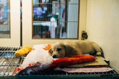As terapias integrativas também podem serem aplicadas em outras doenças degenerativas em pets. (Foto: Markus Winkler/Unsplash)