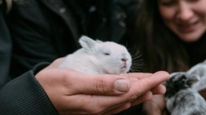 Apesar de ser desafiador, avaliar dor em coelhos foi possível, afirma professor. (Foto: Daan Stevens/Unsplash)