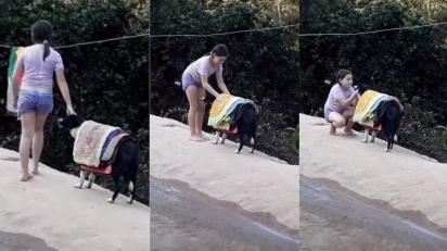 Cachorra ajuda criança a recolher tapetes do varal. (Foto: Reprodução Facebook/Catioro Reflexivo)