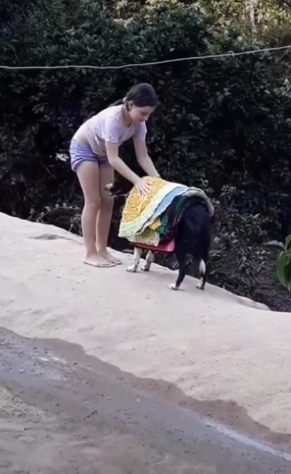 Cachorra fica ao lado de menina para auxiliá-la a recolher os tapetes do varal. (Foto: Reprodução Facebook/Catioro Reflexivo)