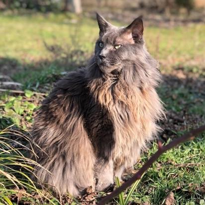 O gato Roger. (Foto: INstagram/rogercoonie)