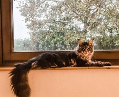 A gata Gastone. (Foto: Instagram/gastone_il_gattone)