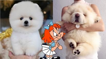 Cães que se parecem com urso de pelúcia. (Foto: Instagram/mac_dogsociety | Instagram/puffie_the_chow)