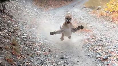 Momento em que o puma tenta atacar Kyle. (Foto: Reprodução Youtube/Kunkyle z)