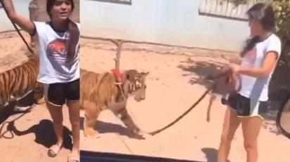 Menina de Guasave, em Sinaloa, no México, é vista passeando com tigre. (Foto: Newsflash)