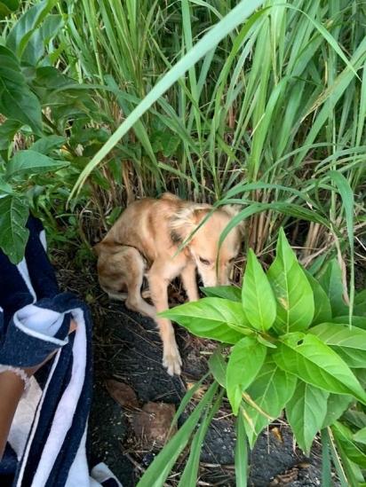 Georgia Harding e Sam Blackburn encontraram Simba numa viagem que fizeram para Barbados, Caribe. (Foto: Instagram/georgiaharding_x)