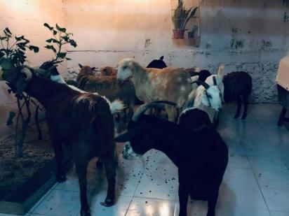 O ativista já abrigava animais antes do Furacão Delta. (Foto: Facebook/Ricardo Pimentel Cordero)
