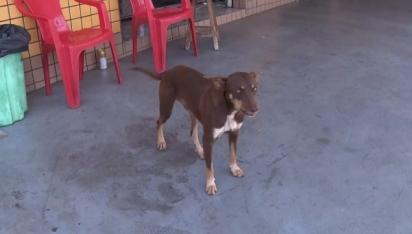 Cachorrinho encontra carteira perdida e entrega para mulher que devolve para dono. (Foto: Reprodução / RPC Londrina)