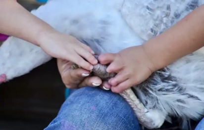 """A mão de Harper, esquerda, e a mão de Jay Salazar, 4, que também tem uma """"mão de sorte"""". A mãe de Harper disse que sua filha se beneficiou por conhecer animais em condições semelhantes e também por conhecer outras crianças como ela. (Foto:Safe in Austin)"""