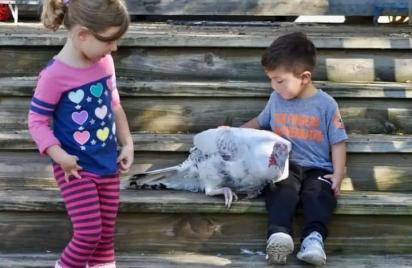 Harper Wulms, 5, e Jay Salazar, 4, visitam Priscilla, o peru e outros animais com necessidades especiais no Safe in Austin. A mãe de Harper disse que aumentou sua autoconfiança. (Foto: Safe in Austin)