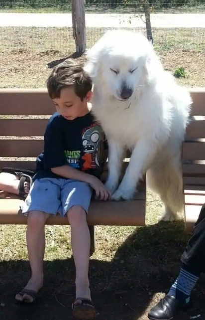 O filho autista de Jamie Wallace-Griner, Jackson, então com 6 anos, com seu cão de serviço, Angel. Wallace-Griner disse que seu vínculo especial é o que a impulsionou a criar o santuário. (Foto: Safe in Austin)