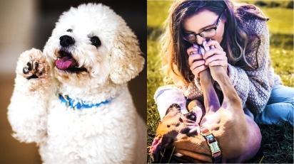 O cheiro da pata do cachorro se assemelha  com o cheiro de salgadinhos de milho. (Foto: Cole Wyland/Unsplash  | Instagram/lunalovesbuddha)