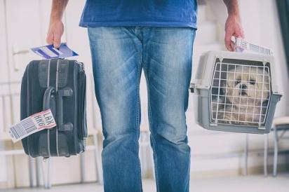 Em São Paulo os pets podem andar nos transportes públicos desde que transportados único e exclusivamente em caixas de transportes. (Foto: Pixabay)