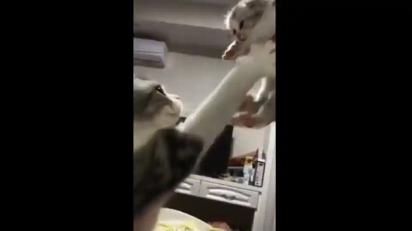 Gata puxa seu filhote para si. (Foto: Reprodução Reddit/Circus-Bartender)