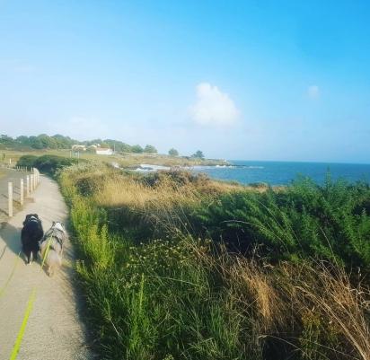 Manter uma rotina de caminhada deixa o pet menos agitado. (Foto: Instagram/mari_new_all)
