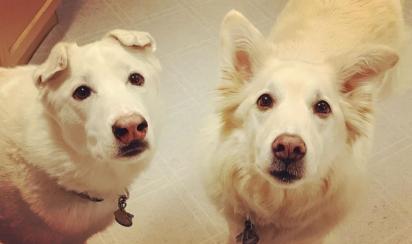 Sophie, à esquerda, que abriu a grade. Sadie, à direita, que seguiu atrás na travessura. (Foto: Instagram/sadie_n_sophie)