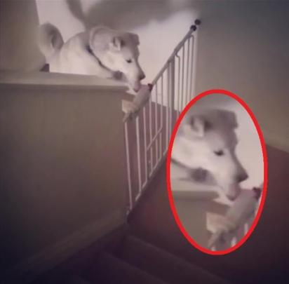 Sophie abre grade de proteção para subir escadas que leva ao segundo andar. (Foto: Reprodução/Kennedy News & Media)