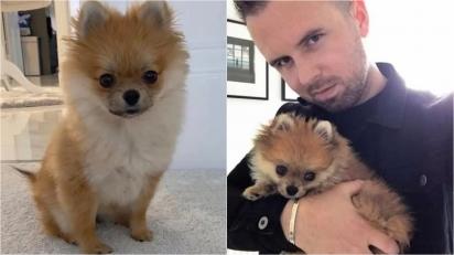 Cachorro da raça Lulu da Pomerânia morre em creche para pets e dono fica inconsolável.  (Foto: Reprodução /  Daily Record)