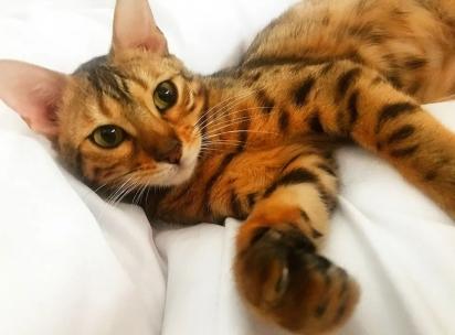 A gatinha Amber deu um grande prejuízo para sua dona, mas com esse olhar é fácil perdoá-la. (Foto: Reprodução/Kennedy News & Media)