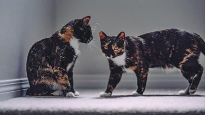 Imagem ilustrativa. A proprietária do gato decidiu cloná-lo em laboratório antes dele falecer. (Foto: Justin Sinclair / Unsplash)